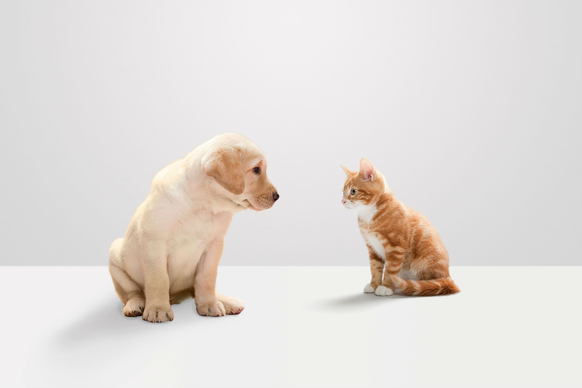 Kittens vs Puppies 10 Reasons Puppies Are Better