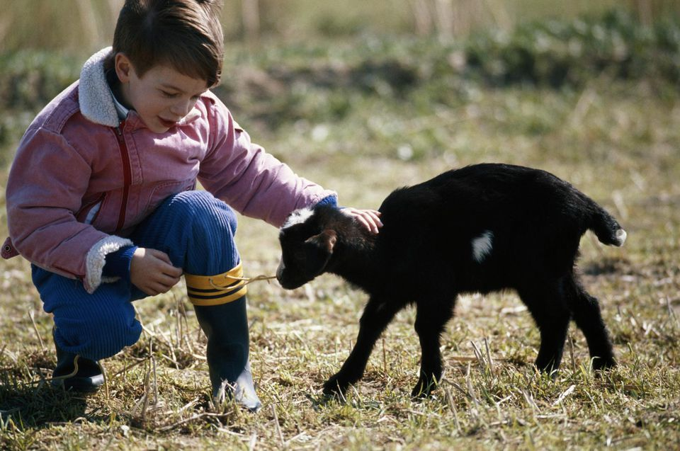 Boy (4-7) touching goat, outdoors