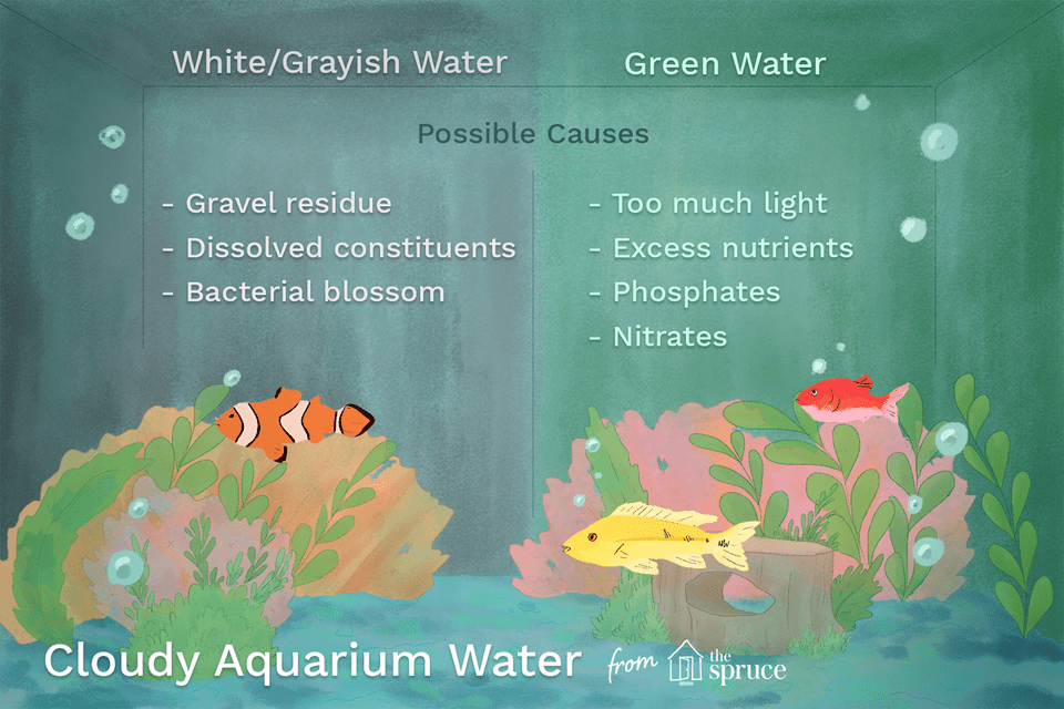 Cloudy aquarium water causes and cures for My fish tank water is cloudy