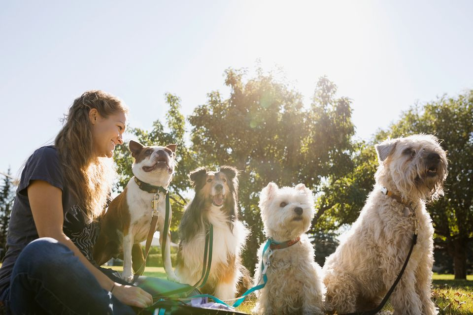 Dogs in park with woman