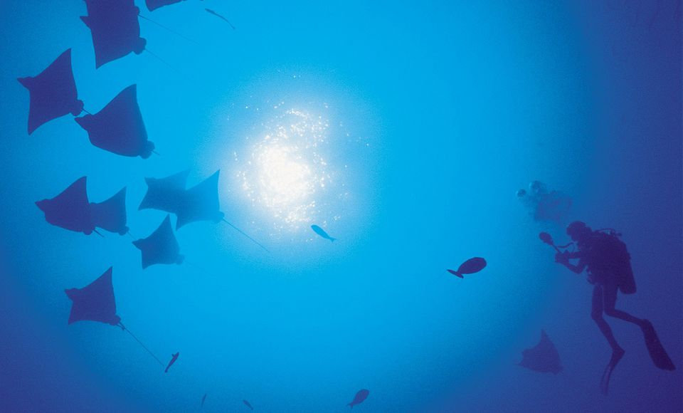 Scuba diver seen from below, with silhouetted rays and fish