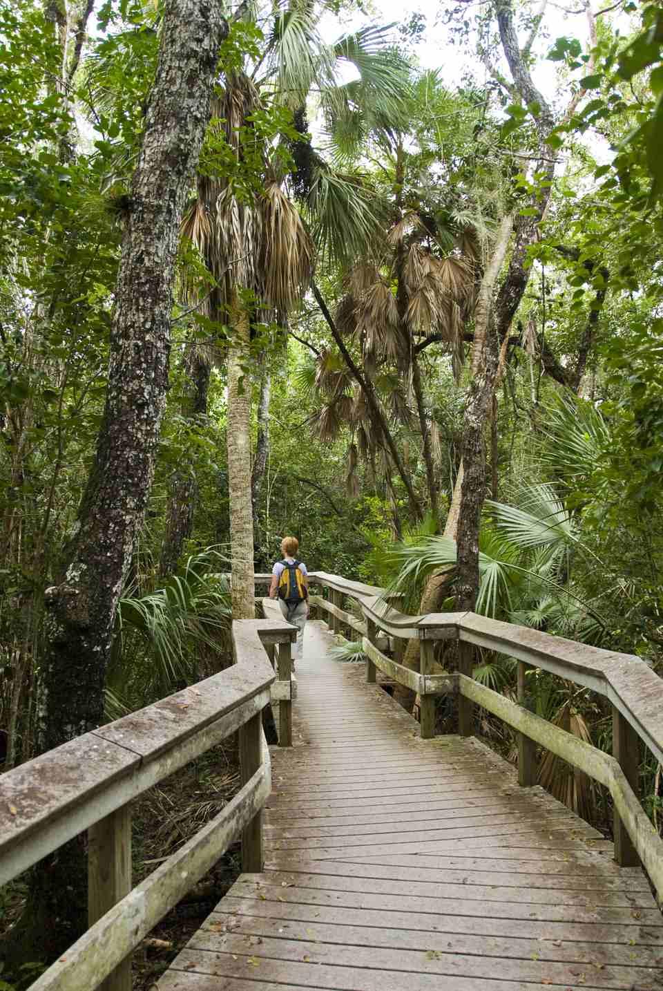 Mahogany Hammock Trail.