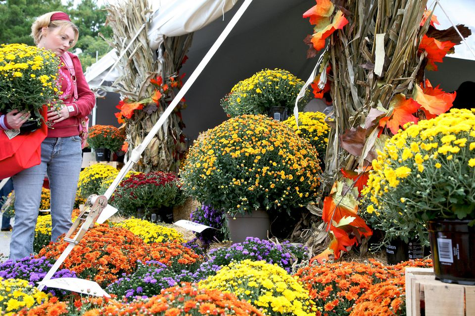Best of Missouri Market at Missouri Botanical Garden