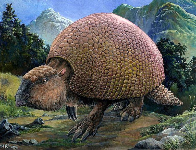 What did Glyptodons eat?