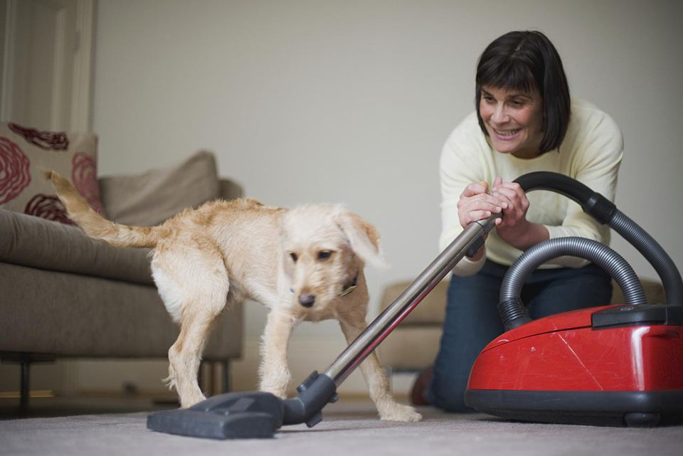 Woman introducing mongrel puppy to noisy vacuum cleaner for the first time