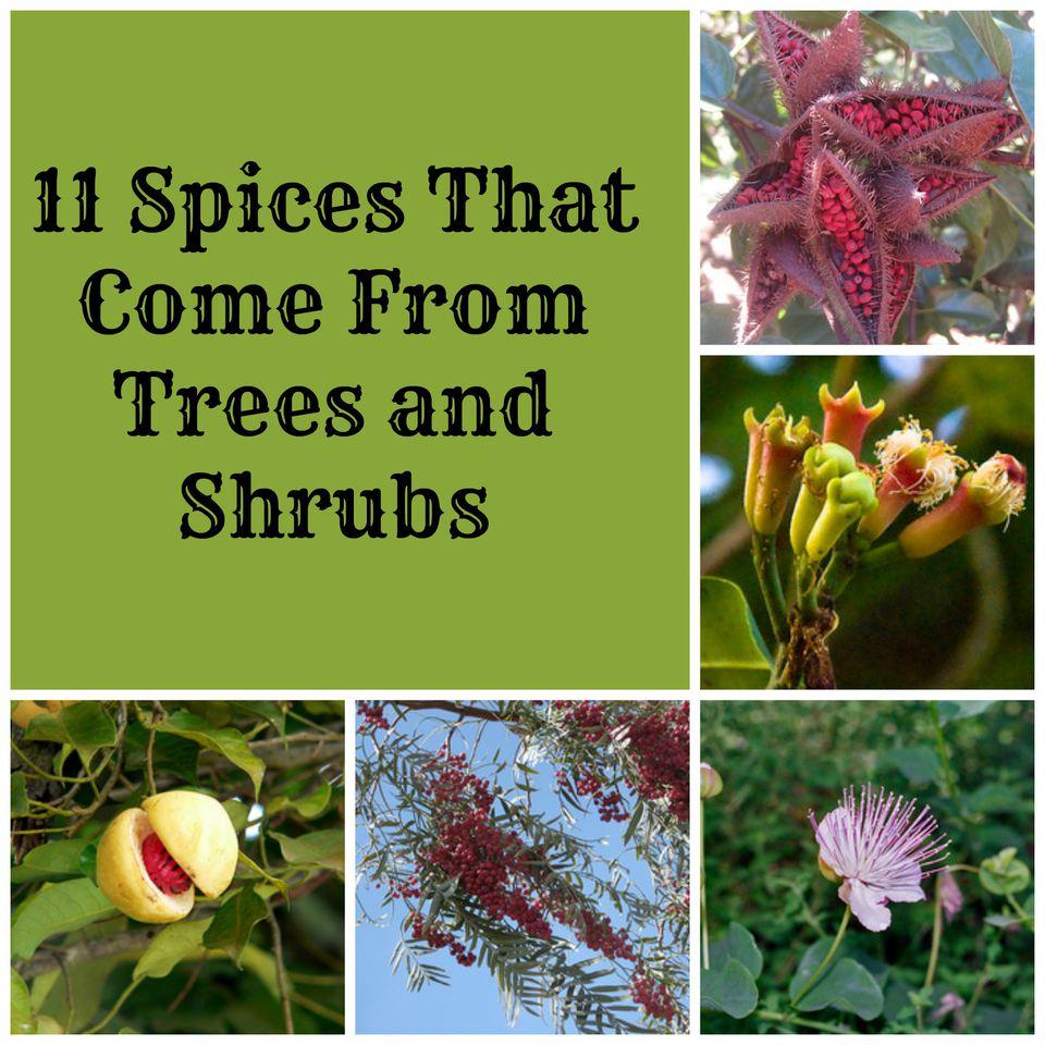 SpicesTreesShrubsCollage.jpg