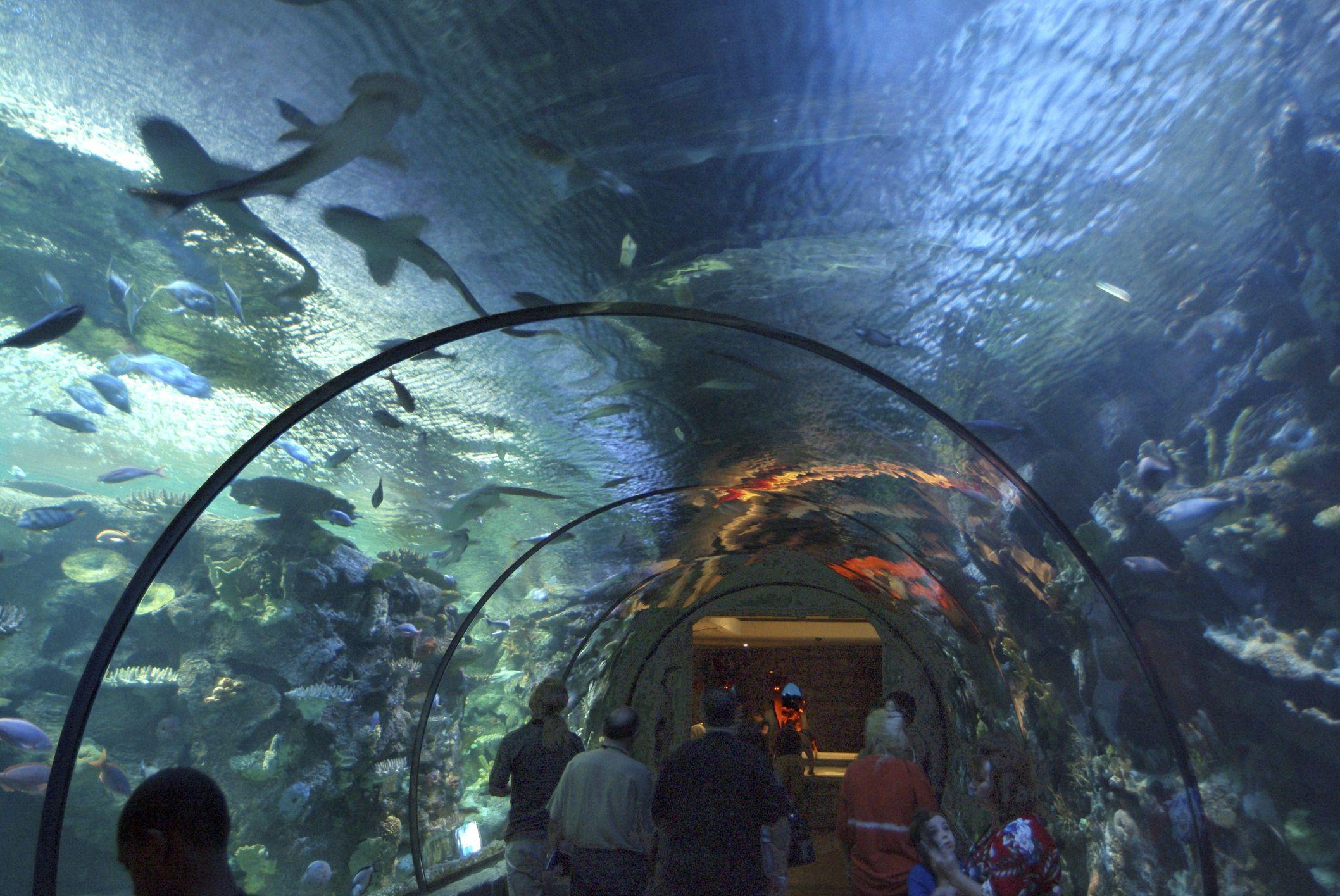 Diving with Sharks in Las Vegas at Shark Reef Aquarium