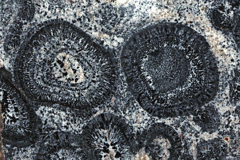 Pre-Cambrian Orbicular Granite