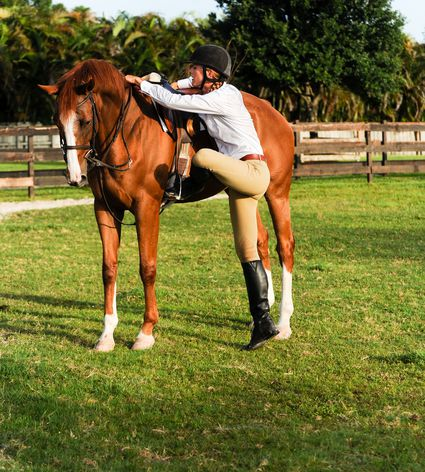 Learn from horses - Home | Facebook