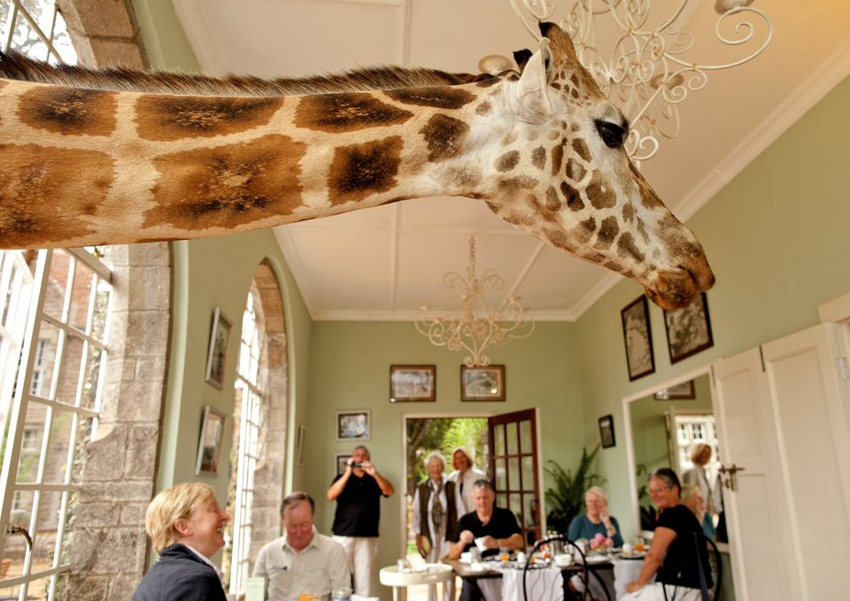 The Africa hotel with giraffes
