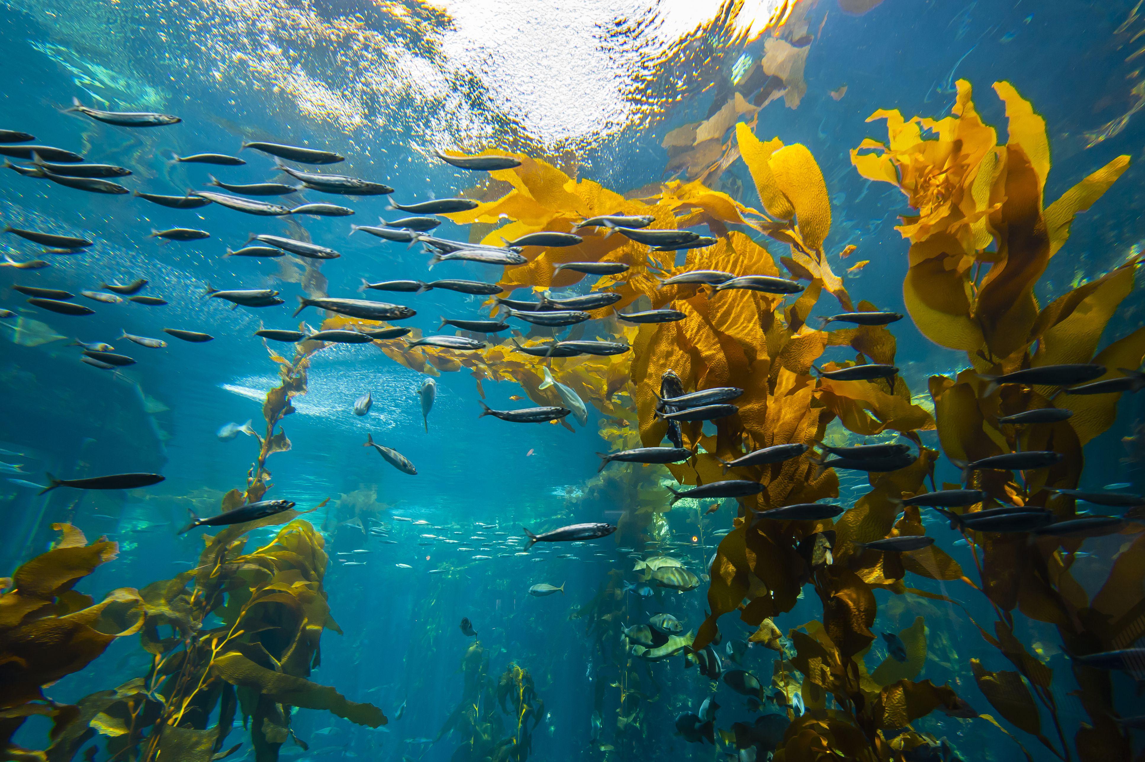 Monterey Bay Aquarium Visitor Guide