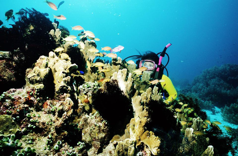 Woman scuba diving near coral and tropical fish. Australia, Queensland, Great Barrier Reef.