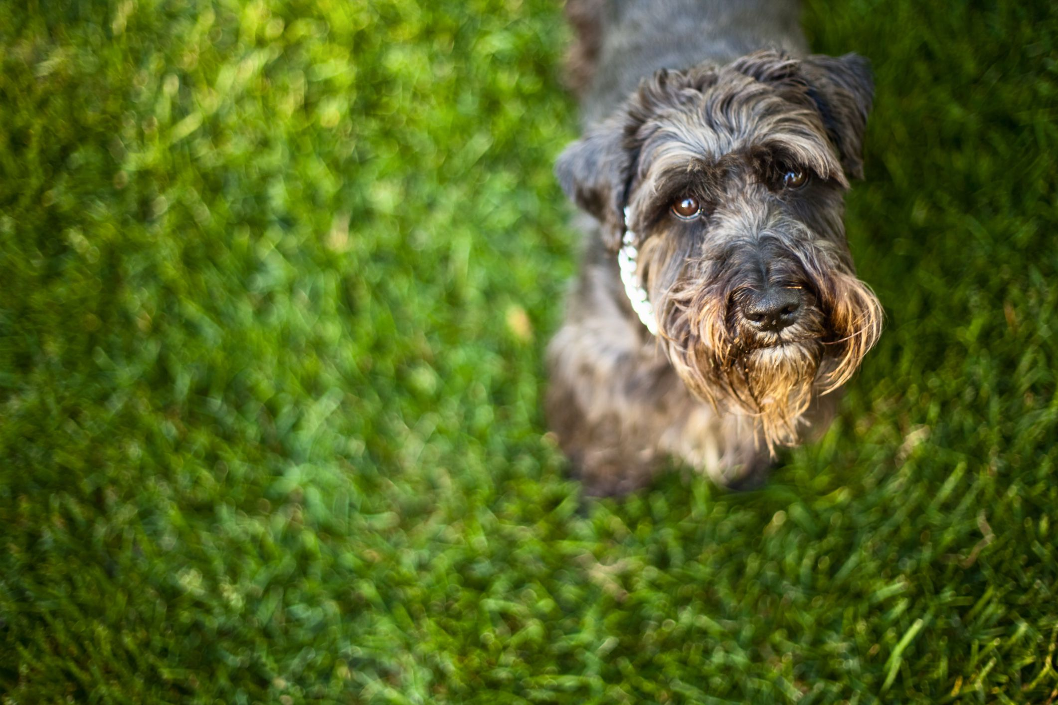 Tips And Tricks For Getting Rid Of Fleas On Dogs