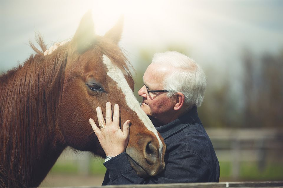 Many holding horse's head gently.