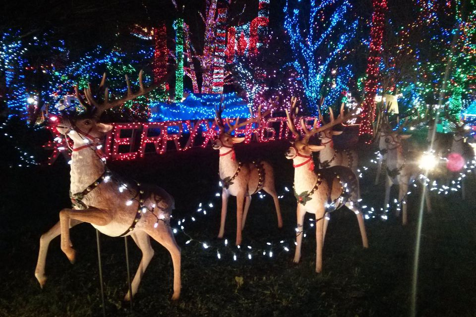 Bright Nights in Stanley Park