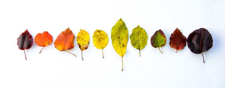 rainbow line of fall leaves