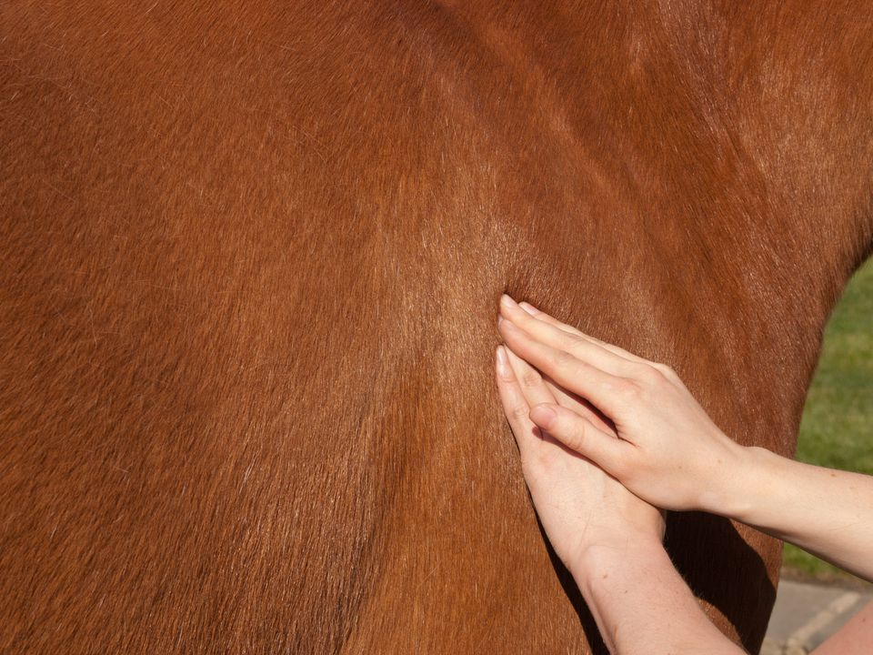 Physiotherapy for a horse