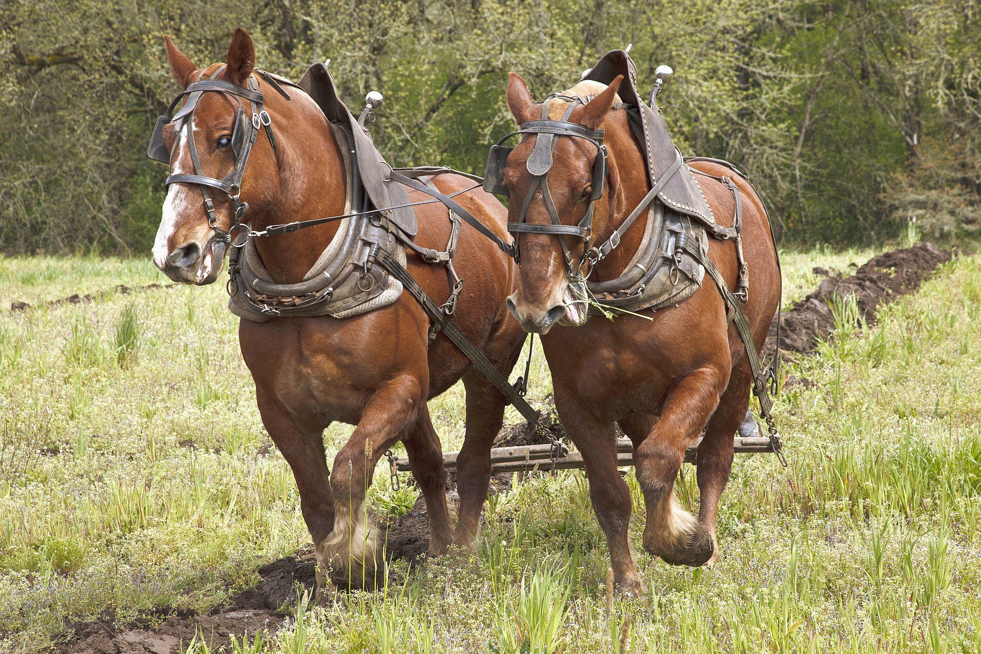 Horse Bet Types