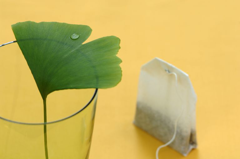 Ginkgo leaf in glass with tea bag, close-up