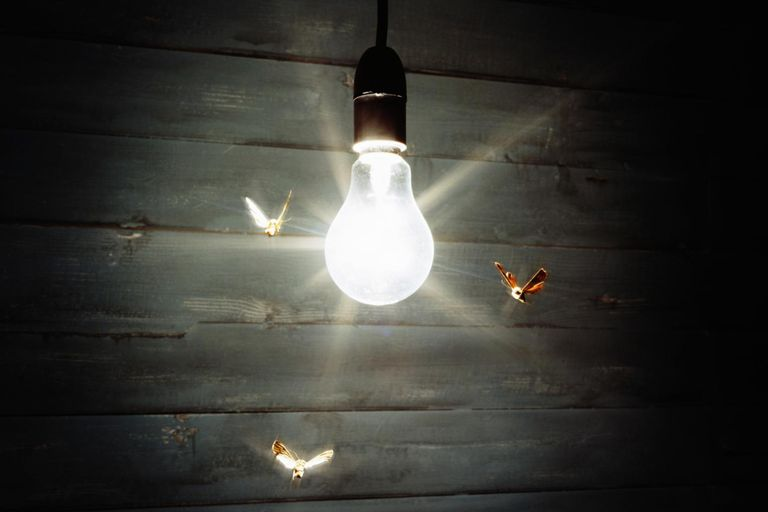 Why Are Bugs Attracted to Lights?