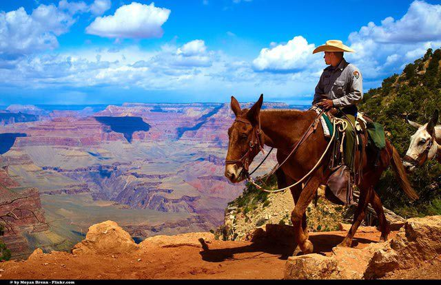 Grand Canyon view from the beginning of the South Kaibab trail with typical mules and cowboy hiking all day long