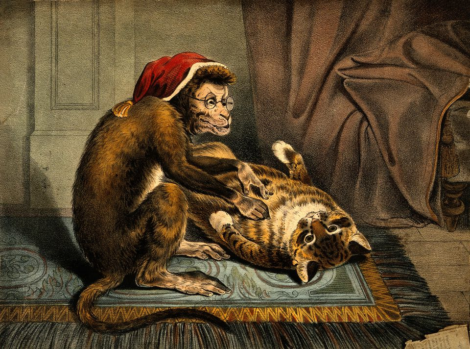 Painting of a monkey physician examining a cat patient for fleas.