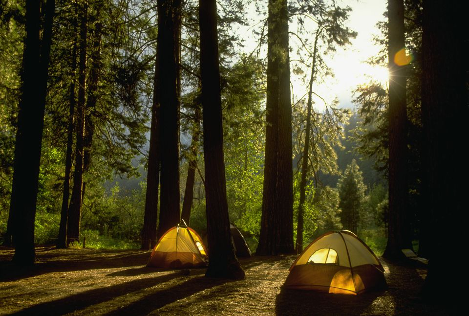Camping in Yosemite Woods