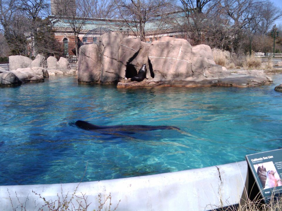 The sea lions at the Bronx Zoo.