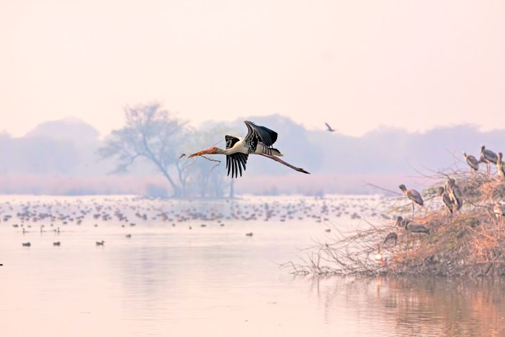 Bharatpur Bird Sanctuary.