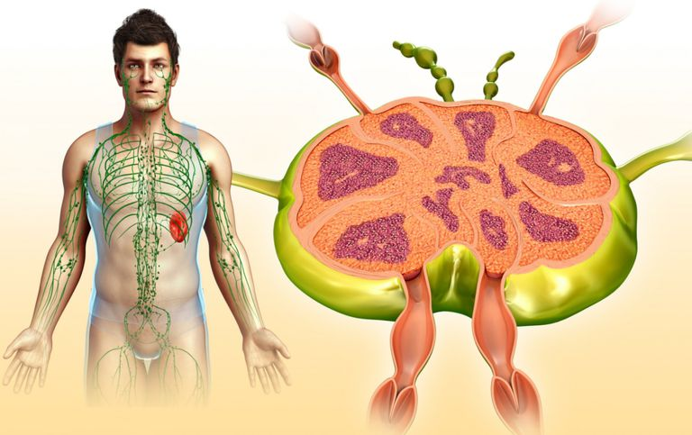 Learn About Lymph Nodes Function Anatomy And Cancer