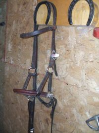 A sidepull bridle hanging on a wall.