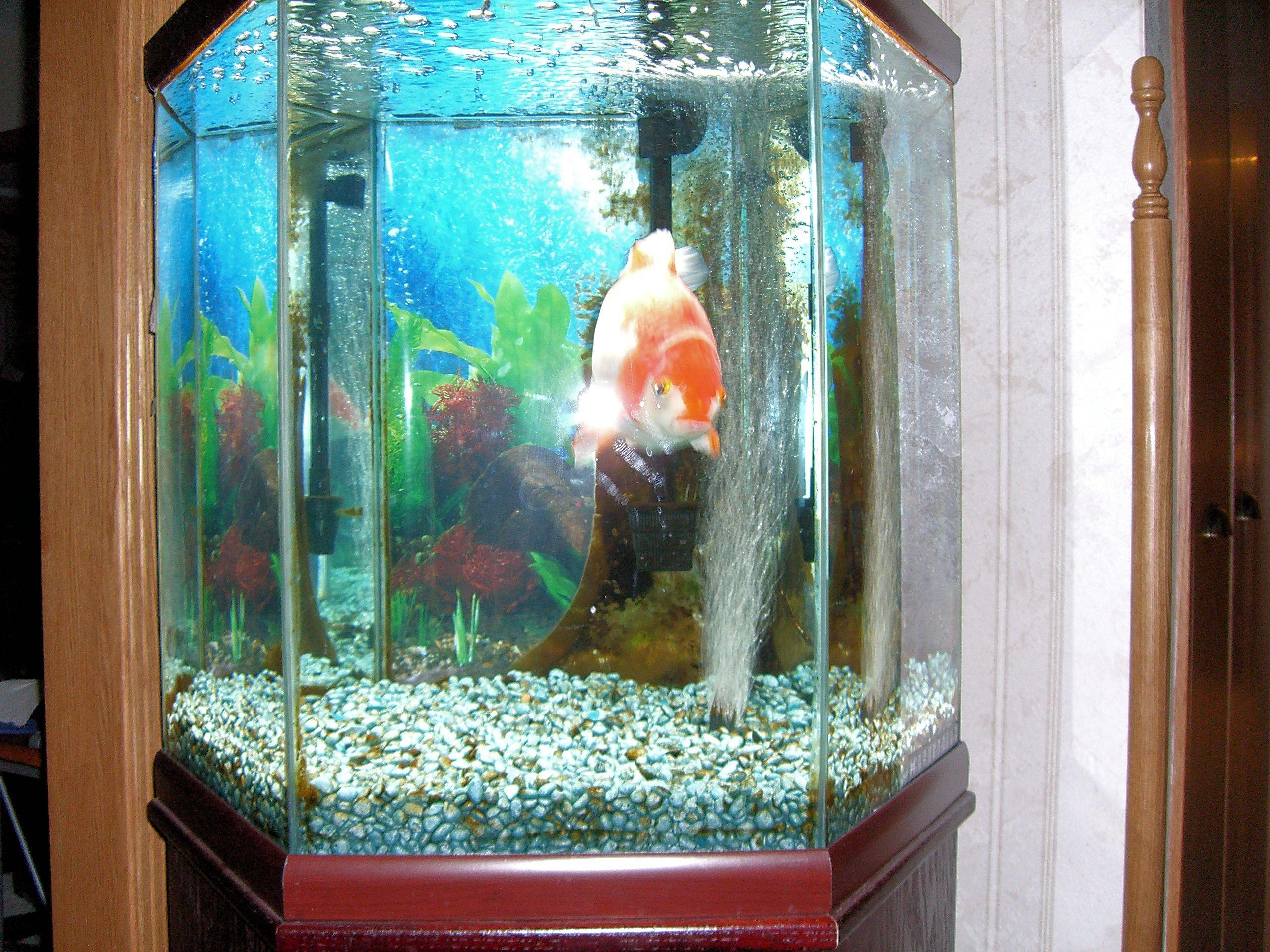 Does Aquarium Tank Width Matter