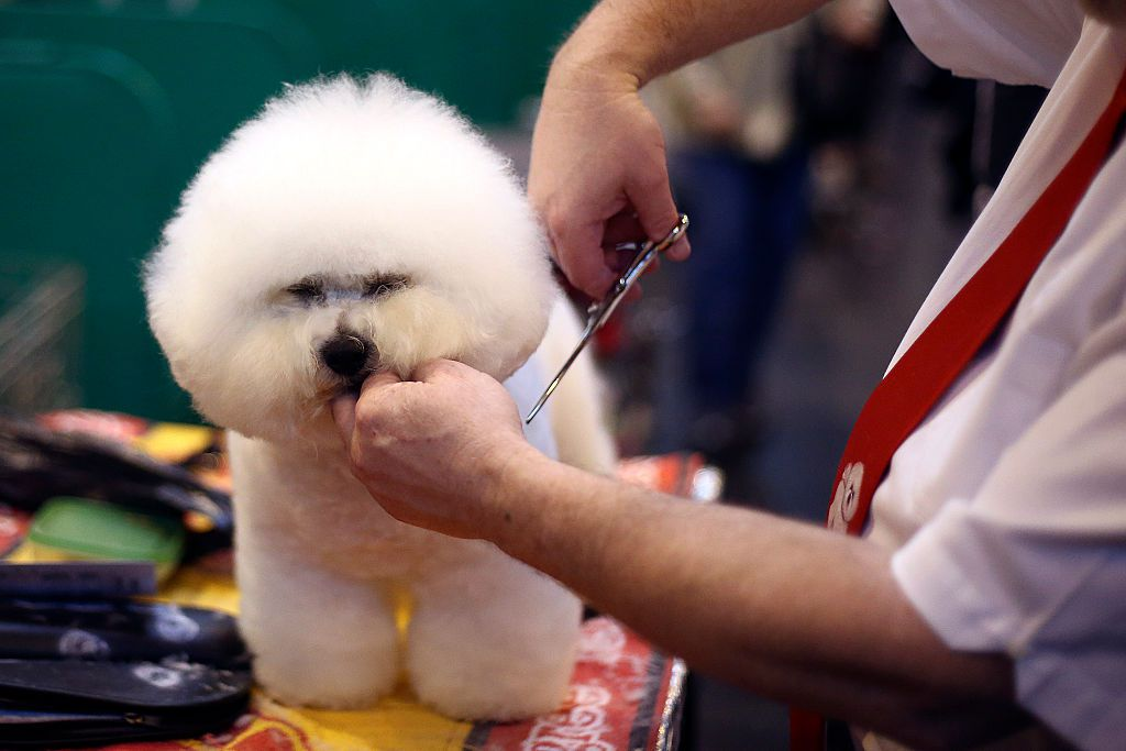Learn how to start a self serve dog washing business here are some helpful tips on how to start a mobile dog grooming salon solutioingenieria Images