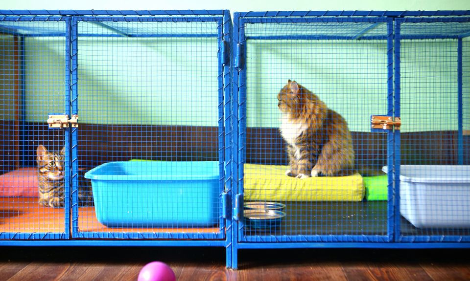 Two cats in cages