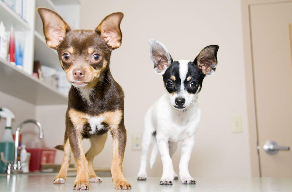 Puppy vet visit