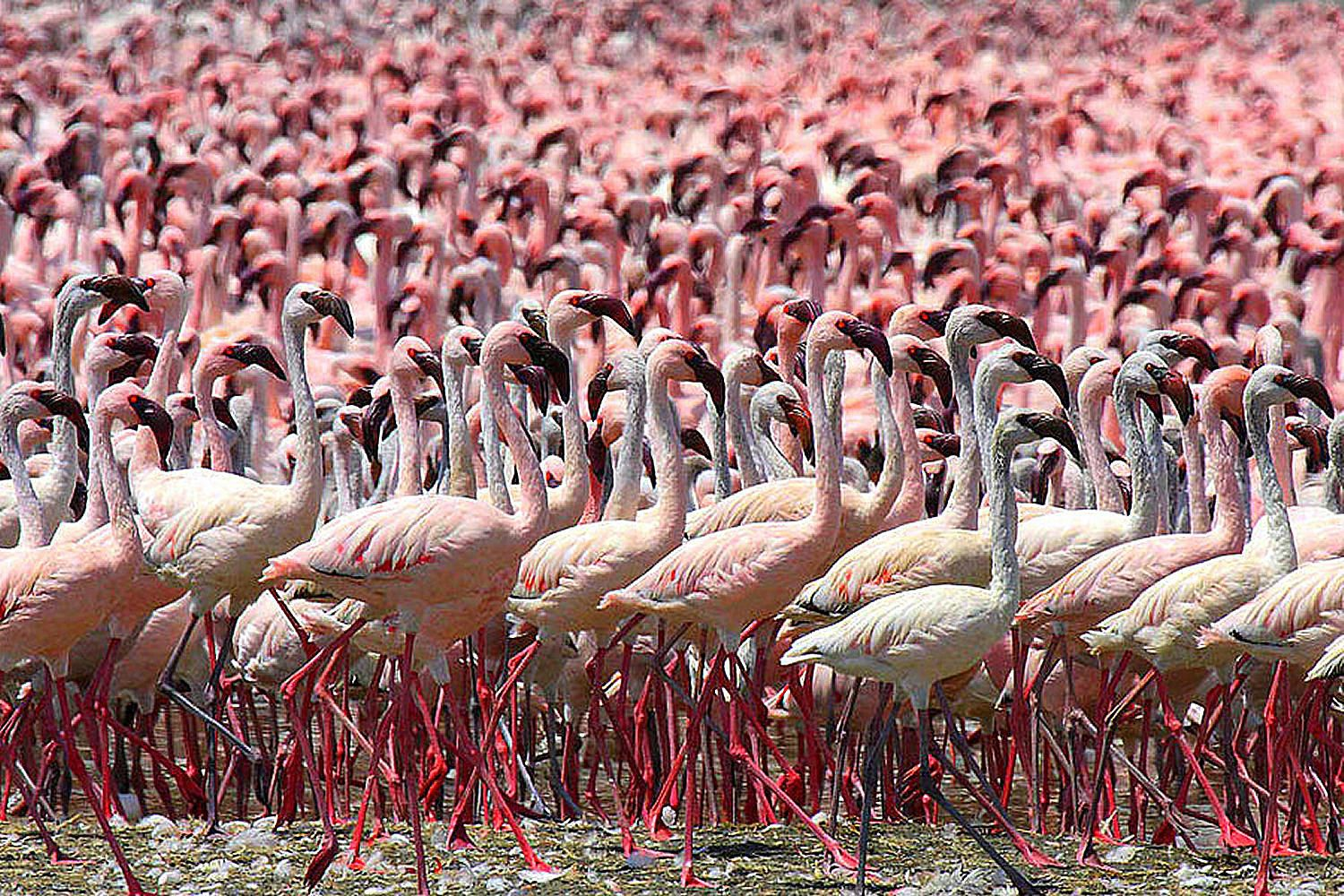 Birding Travel To See Flamingos