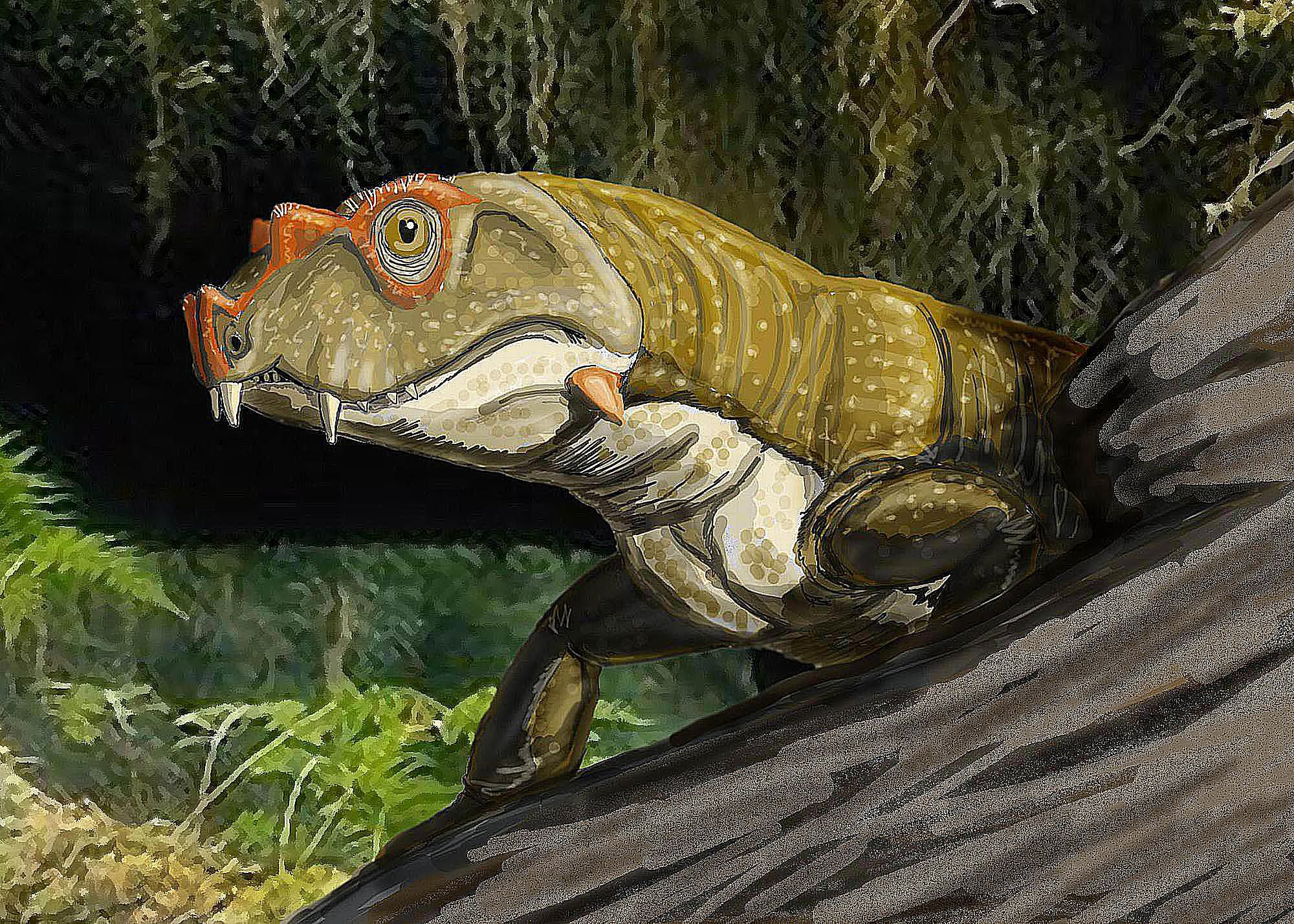 The First Reptiles - The Story of Reptile Evolution