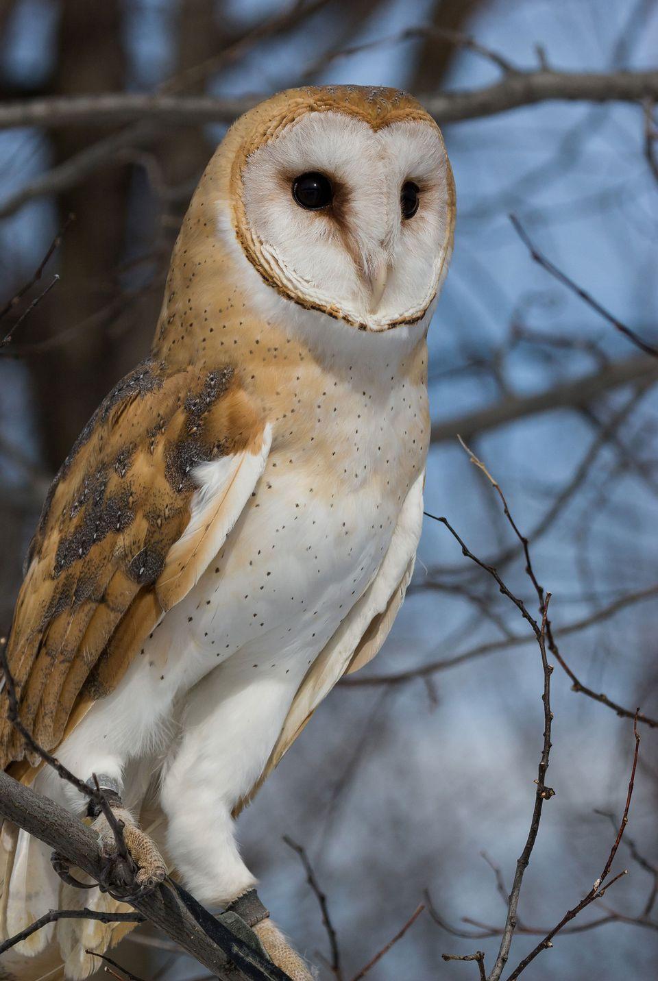 ecomuseum zoo montreal barn owl wildlife park