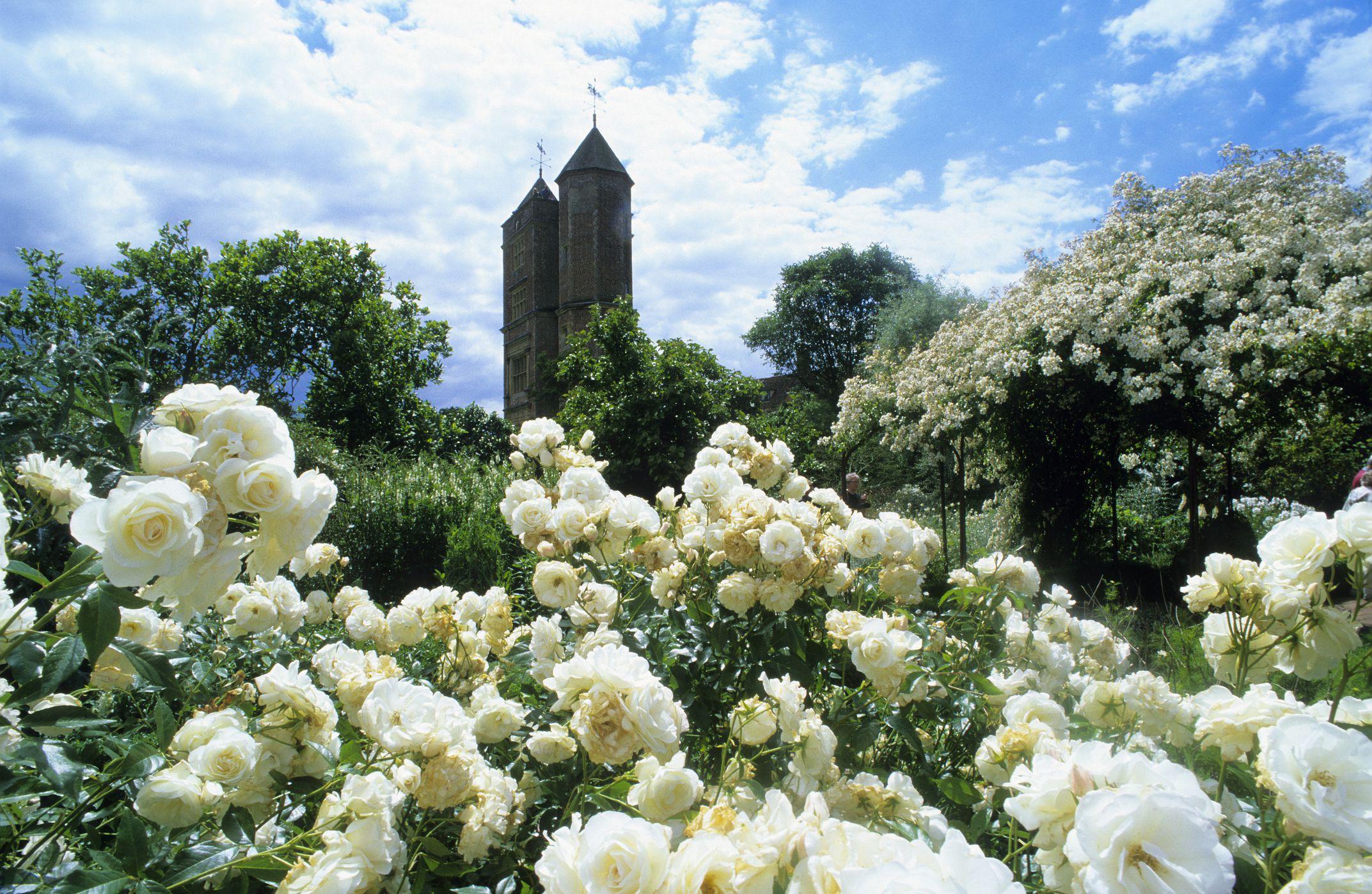 designing a white flower garden gardening ideas - Flower Garden Ideas With Roses