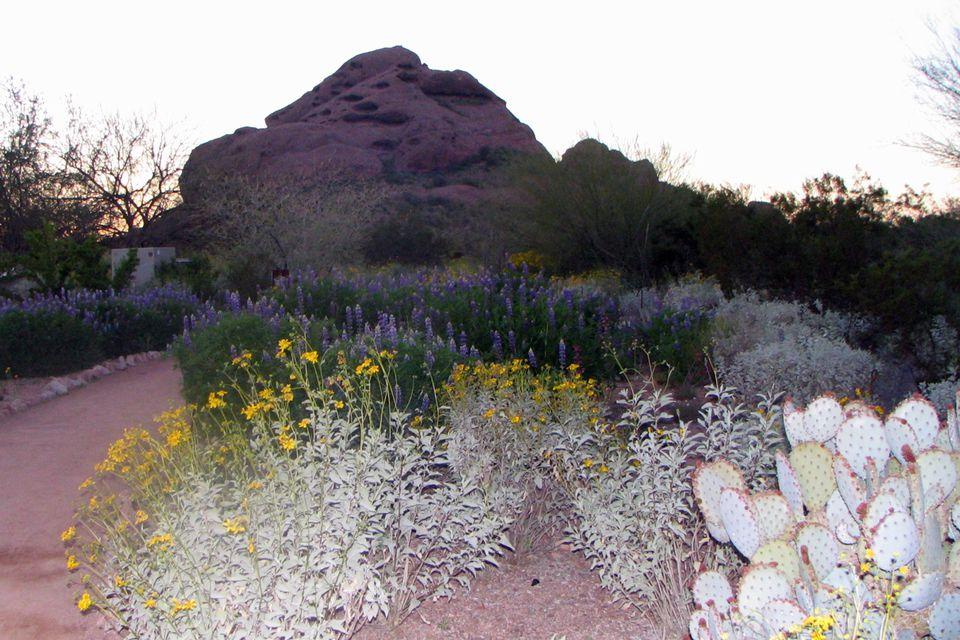 wildflowertrail03_1500.jpg