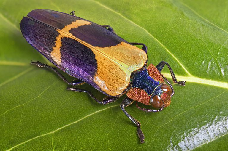 Colorful beetle.