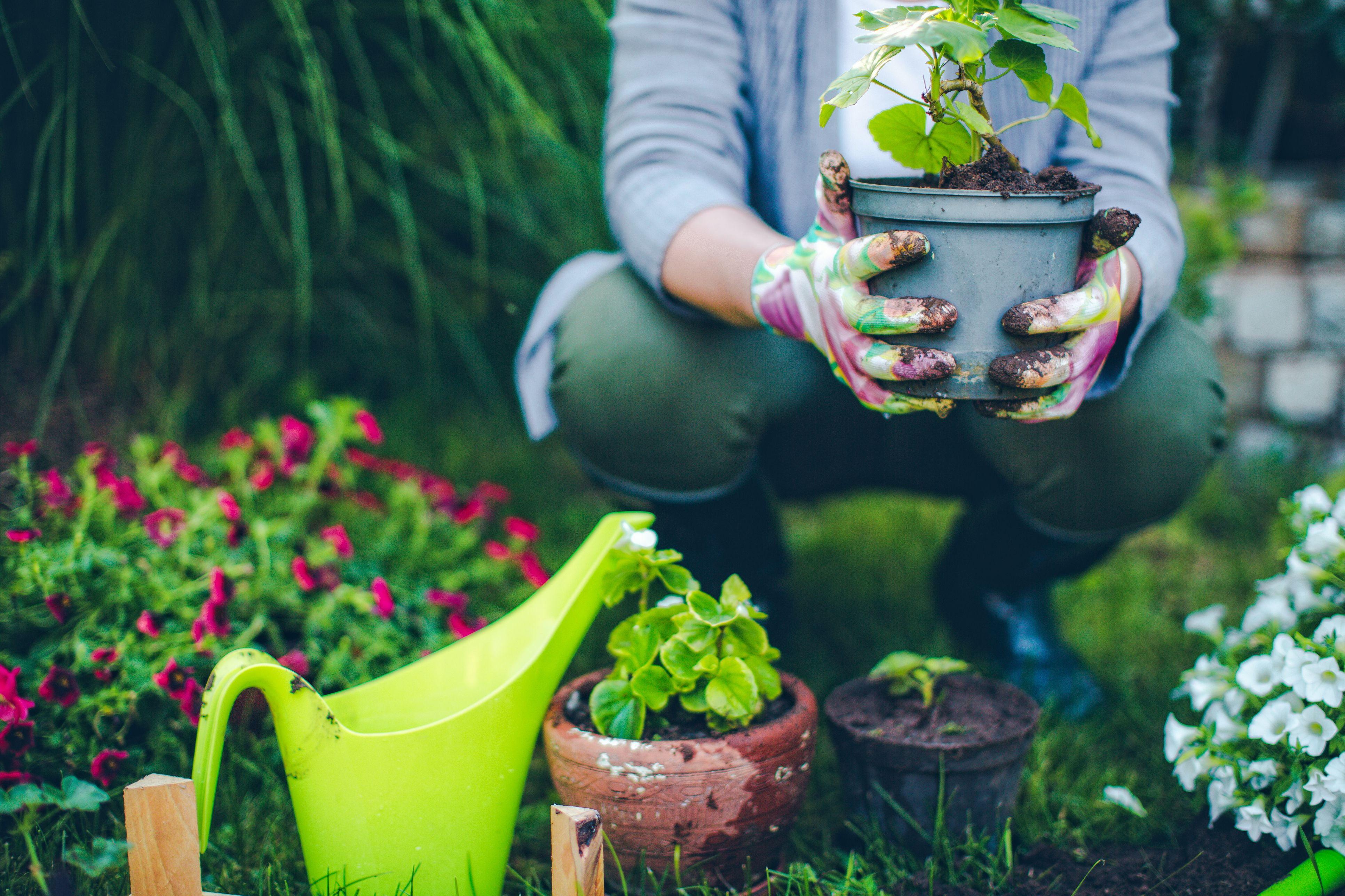 gardening chores for the month of june
