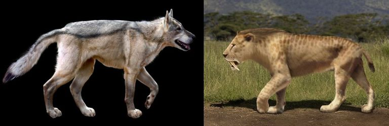 dire wolf saber toothed tiger