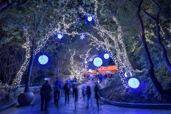 Guide To Visiting Griffith Park In Los Angeles - Christmas Lights In La