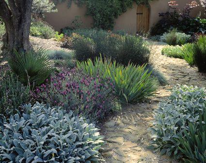 using plants for texture in garden design