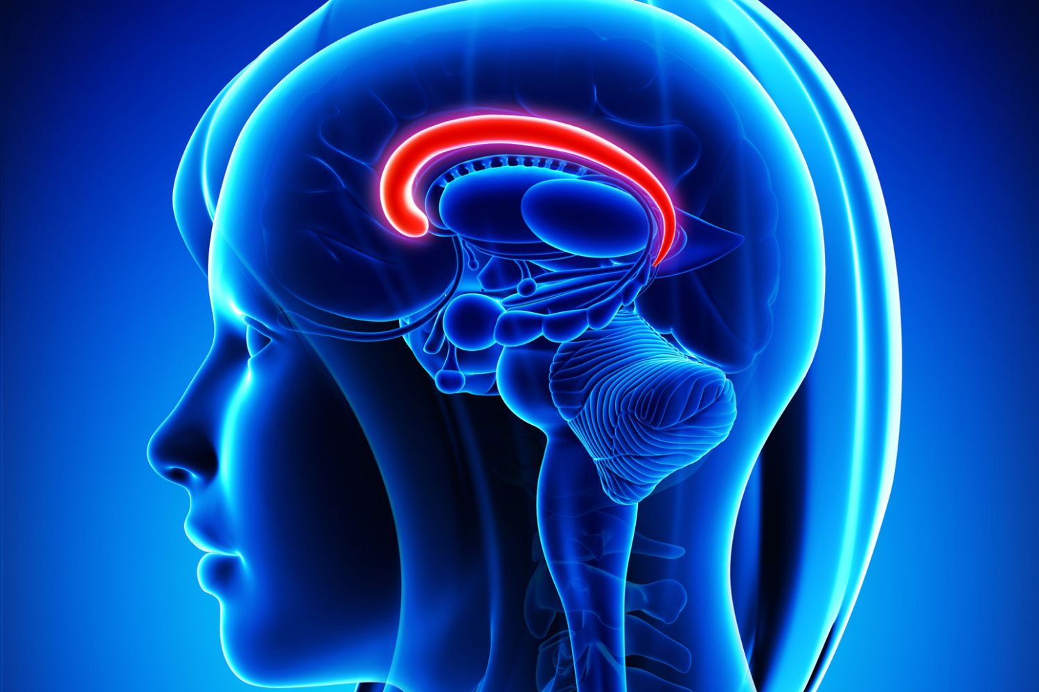 What Is the Cingulate Gyrus? Adhd And Limbic System