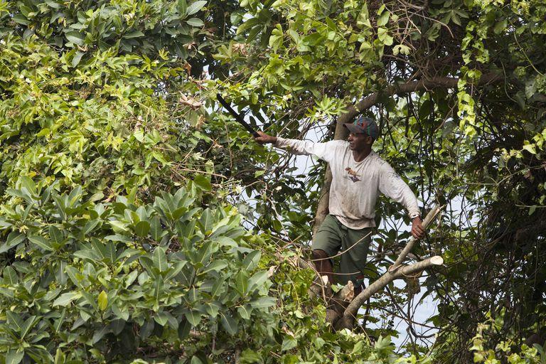 worker pruning tree