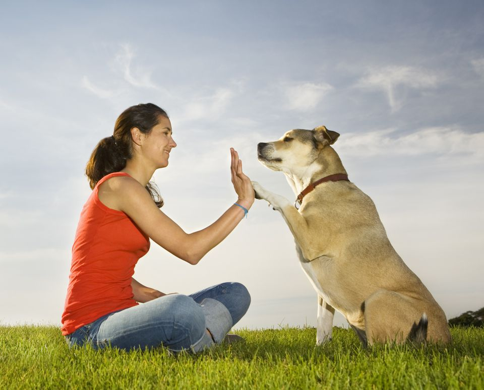dog and owner doing high five