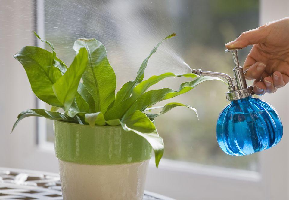 DESIGNER - CLARE MATTHEWS: HOUSEPLANT PROJECT - MISTING/SPRAYING PLANT