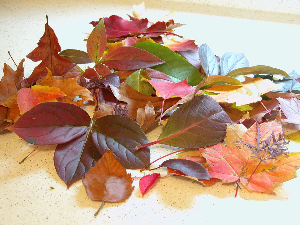 Choosing Which Fall Leaves to Preserve